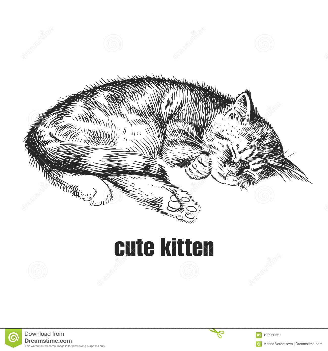 Kitten Is Sleeping  Cute Pet  Hand-made Black And White