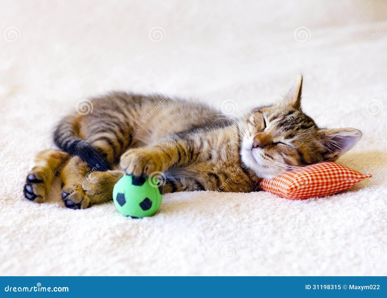 Kitten Sleeping On A Pillow Stock Image Image 31198315