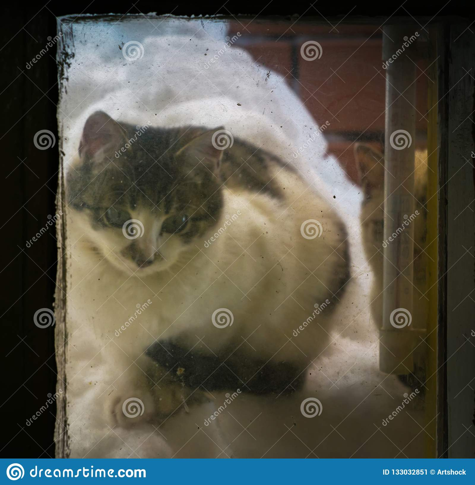 Kitten on snow pile at the window