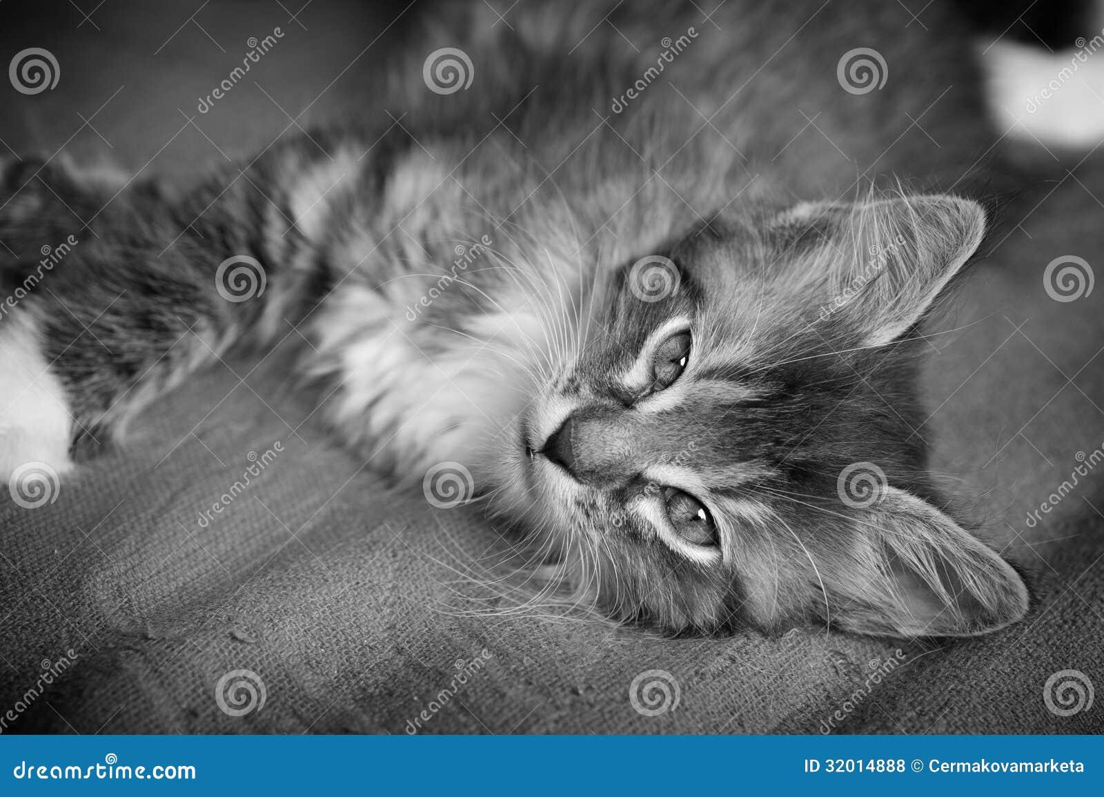 Hairy Kitten 19