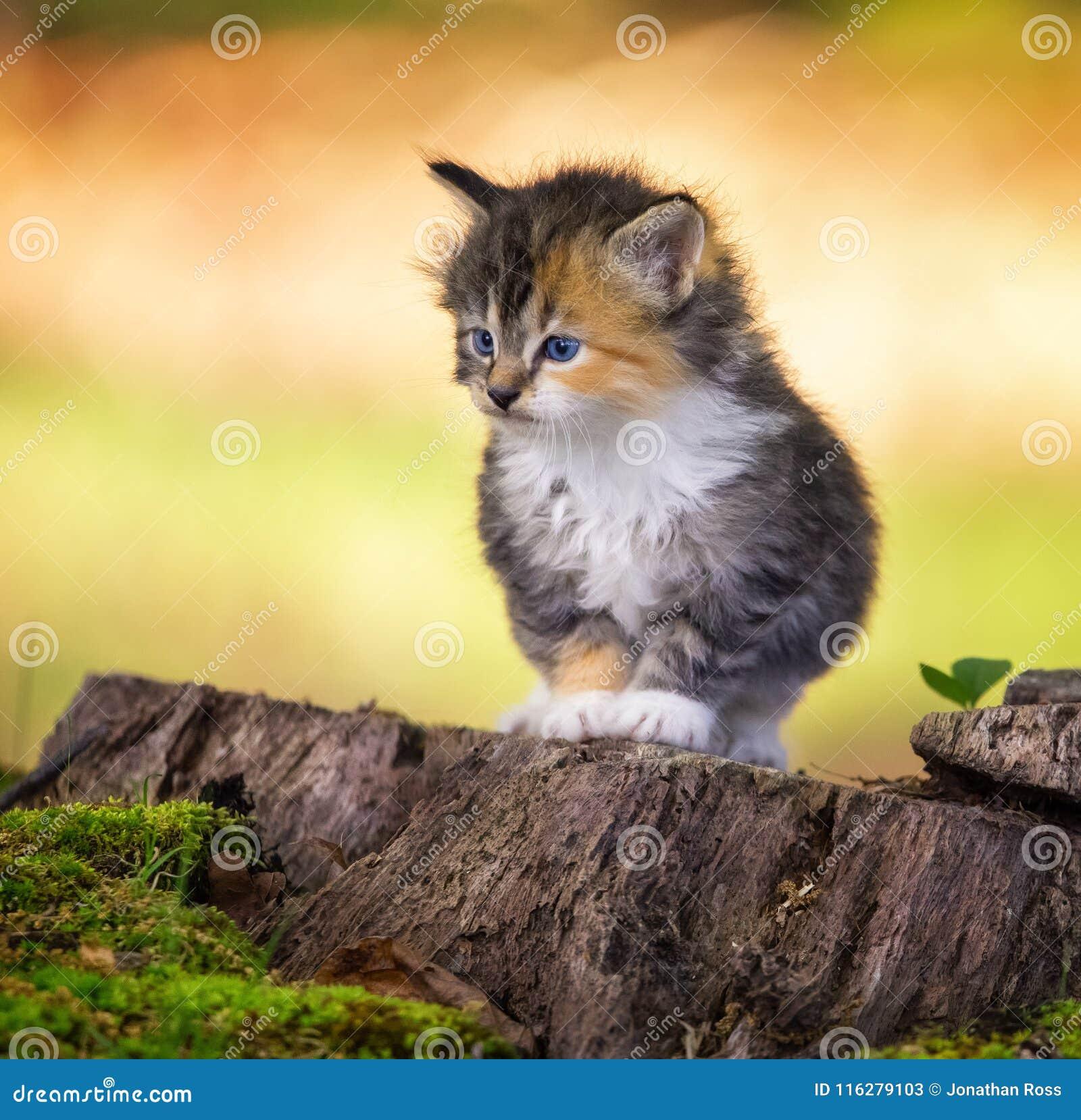 Kitten staring ahead