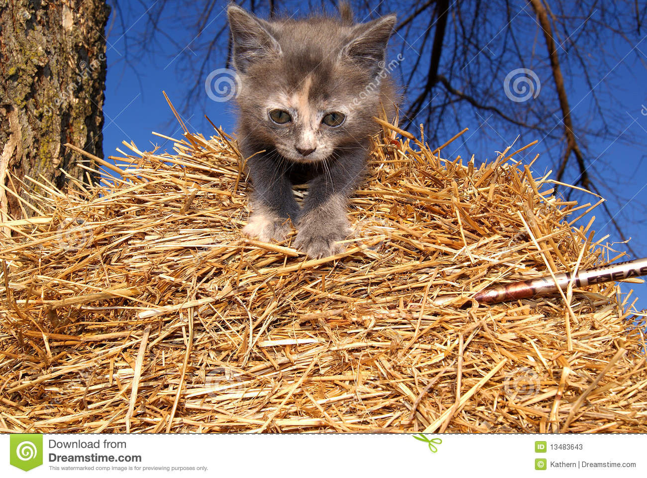Kitten On Straw Hay Bale Stock Photos - Image: 13483643