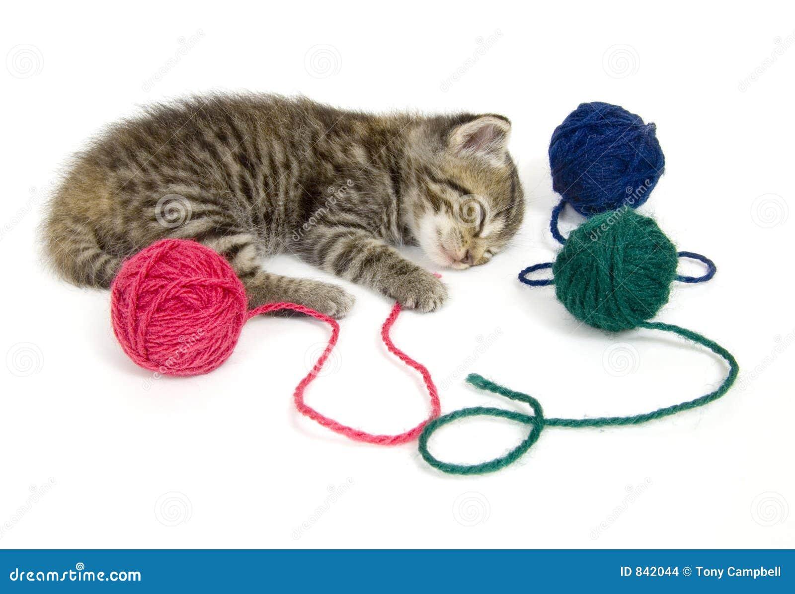 Kitten taking a nap on white background