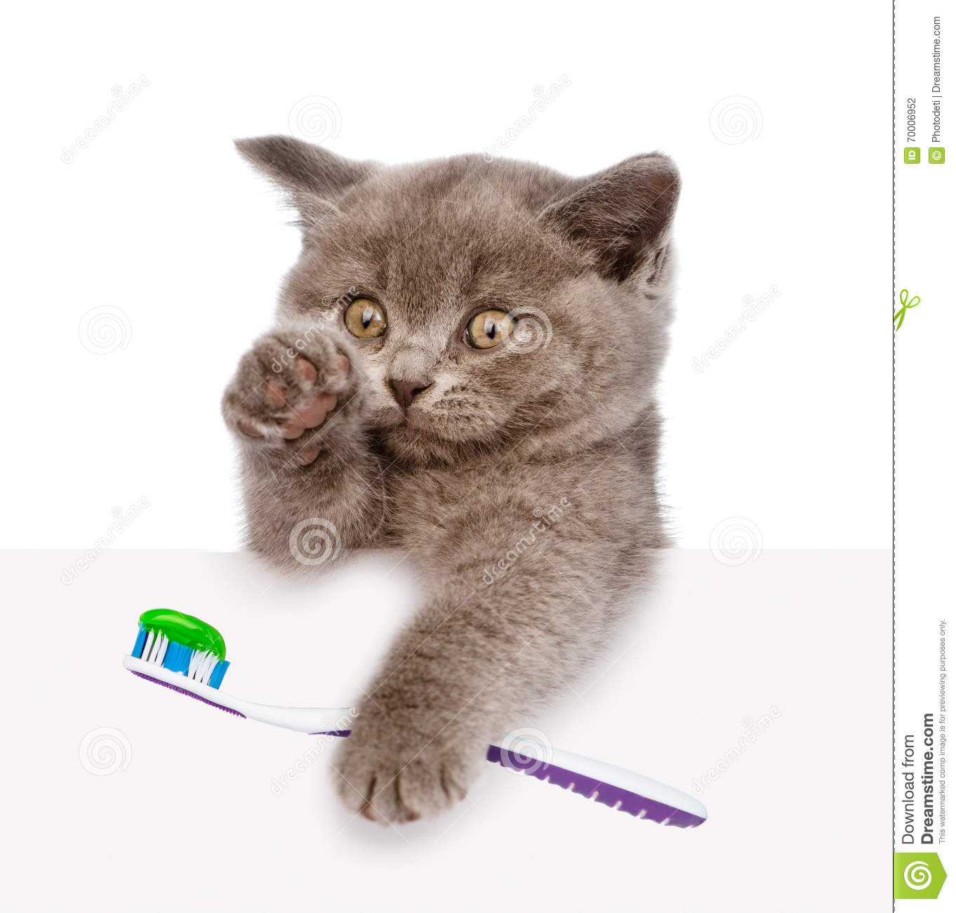 kitten with a toothbrush looking out because of the poster isolated
