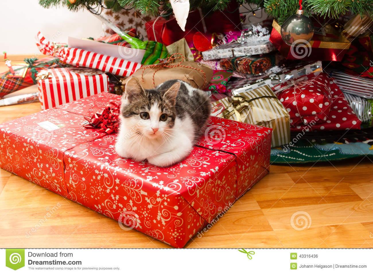Kitten Under Christmas Tree Stock Photo - Image of season, christmas ...