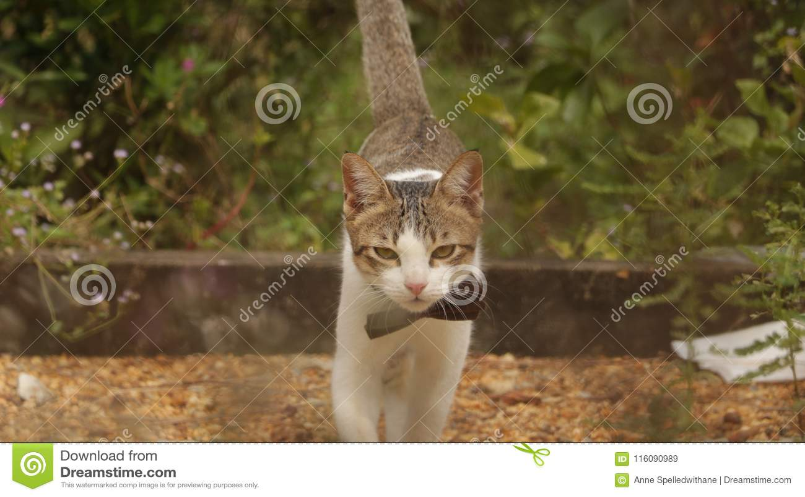 Kitten Walking in Tuin met Grote Boog