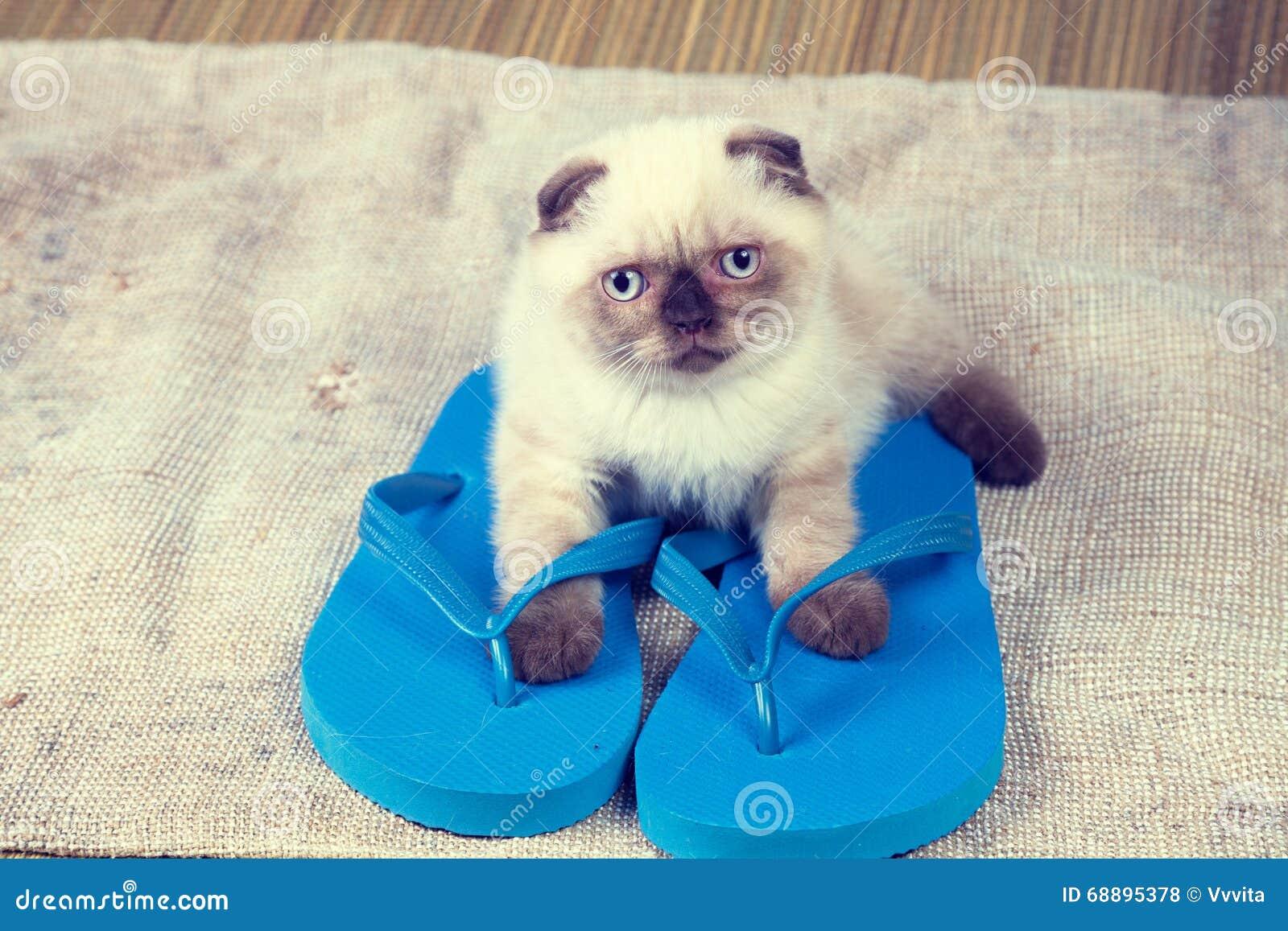 Kitten wearing flip flops sandals