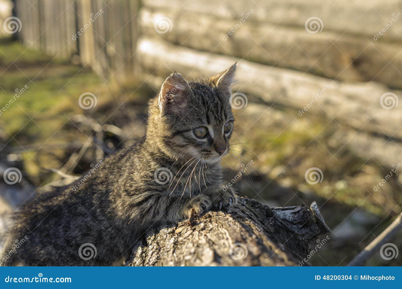 Kitten on wood bark