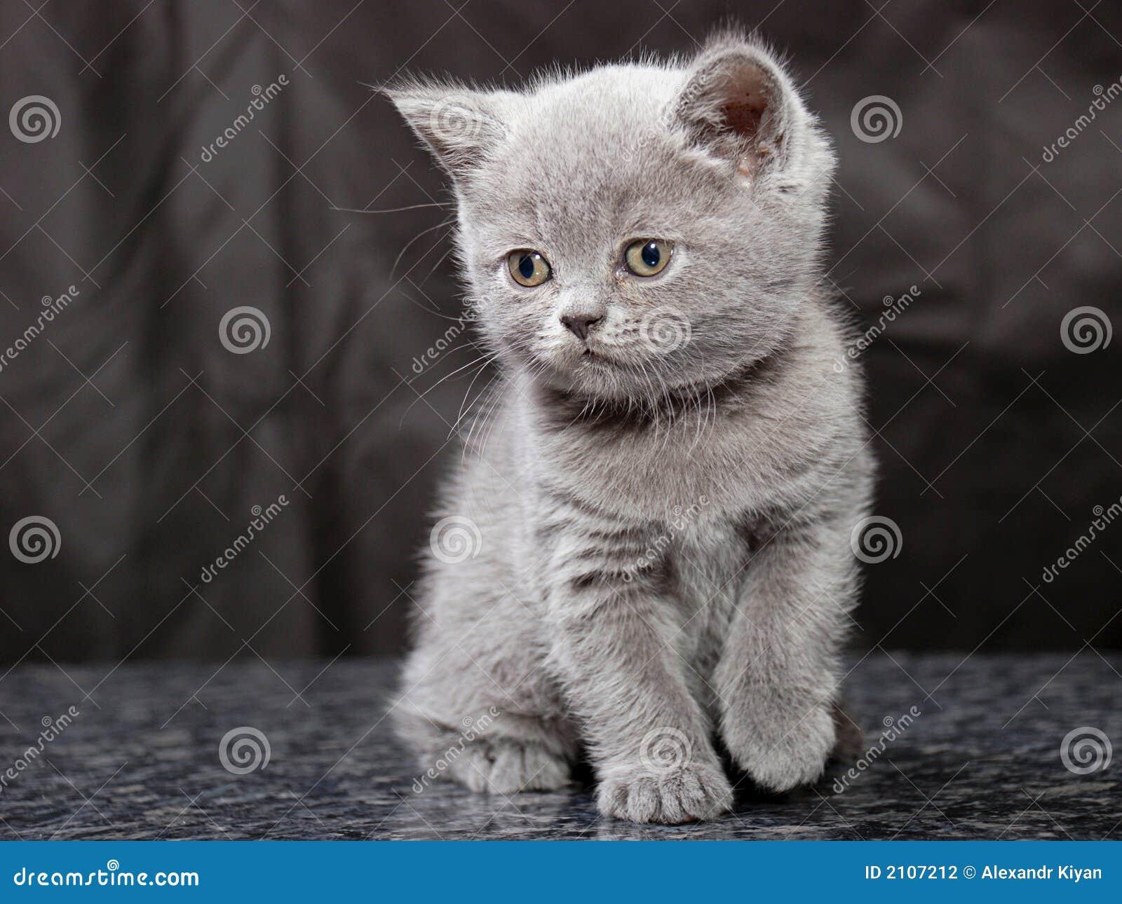 Kitten25