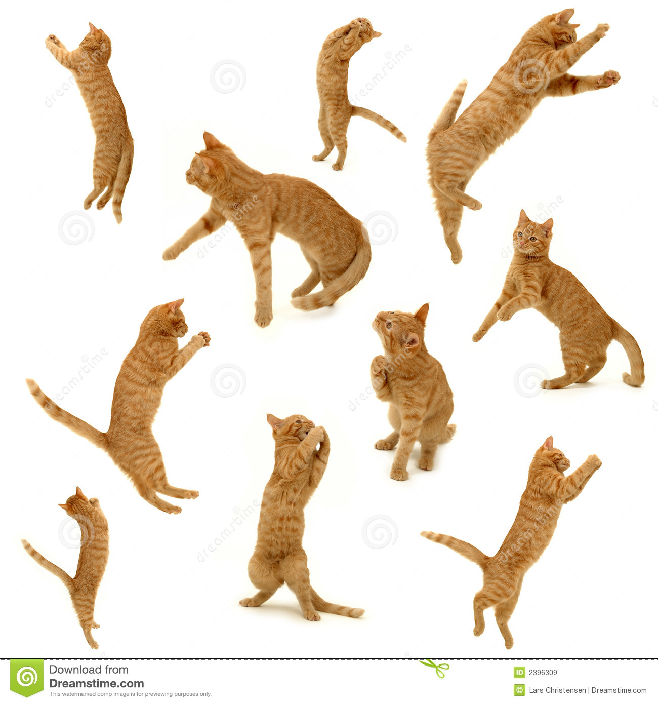 Kittens in action
