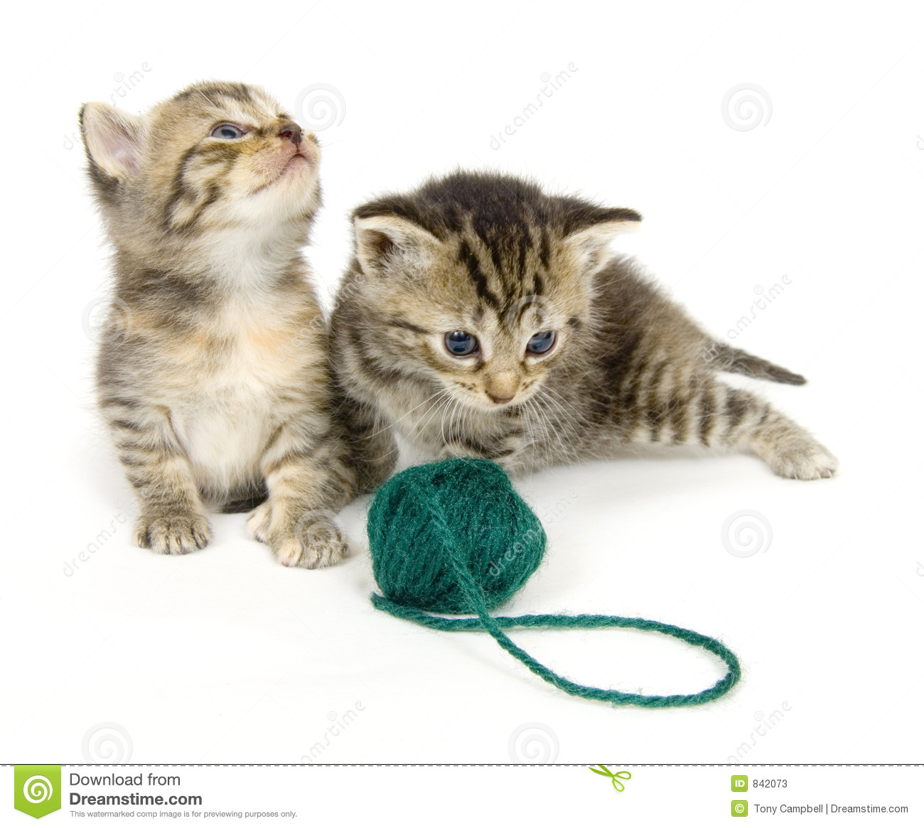 Kittens with ball of yarn on white background