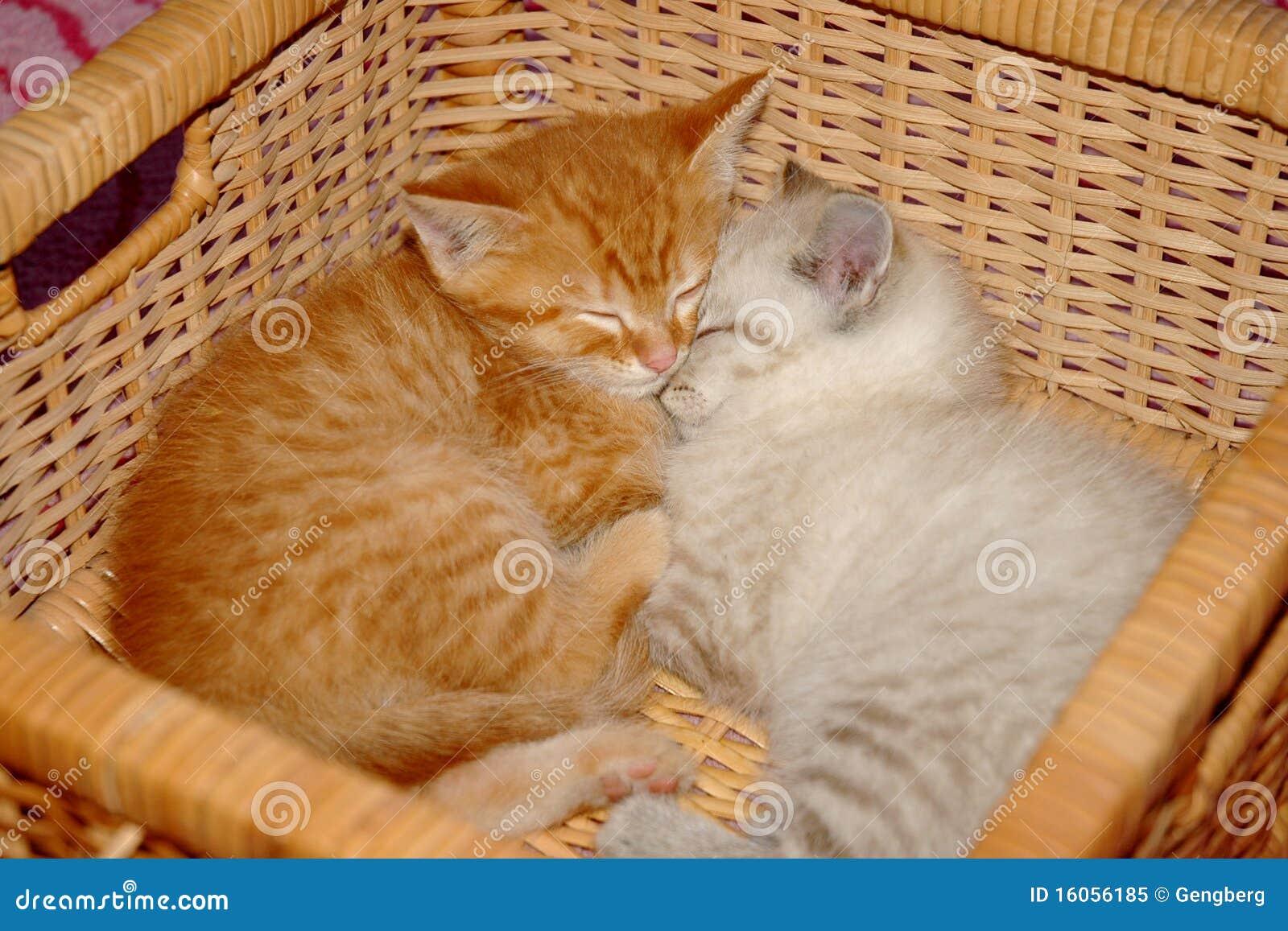 Kittens Basket Royalty Free Stock Photo - Image: 16056185