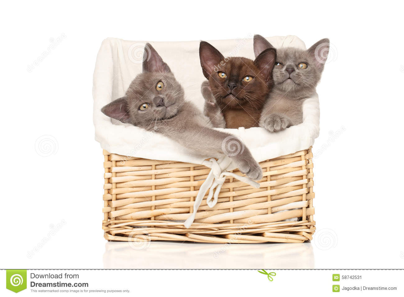 Kittens in basket on a white background