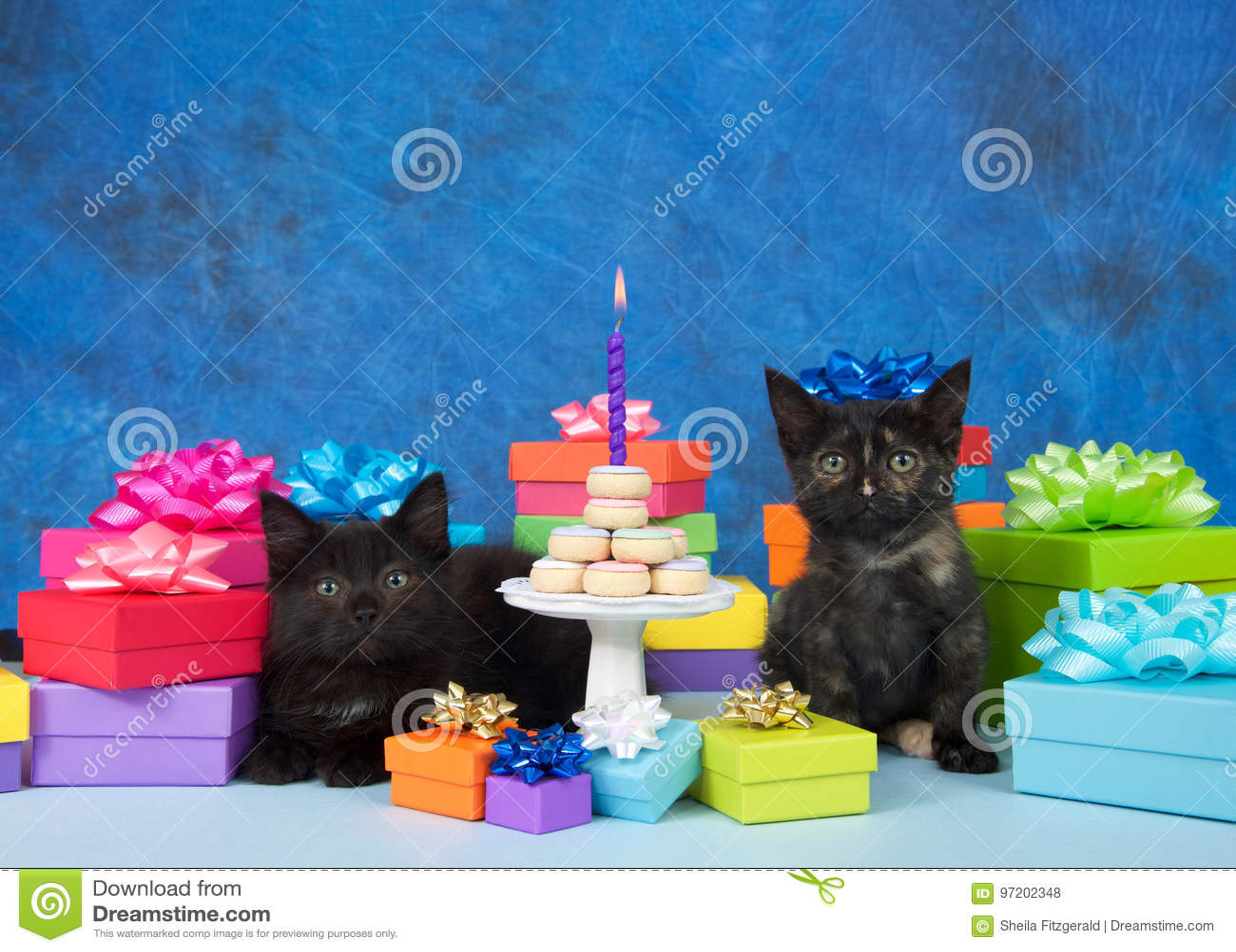 Kittens Birthday Party Miniature Donut Cake Stock Photo Image Of