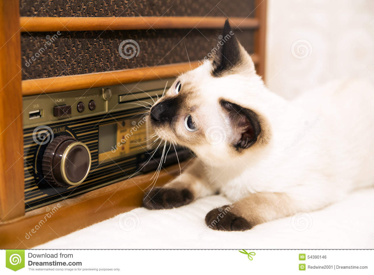 Kittens can also enjoy the music