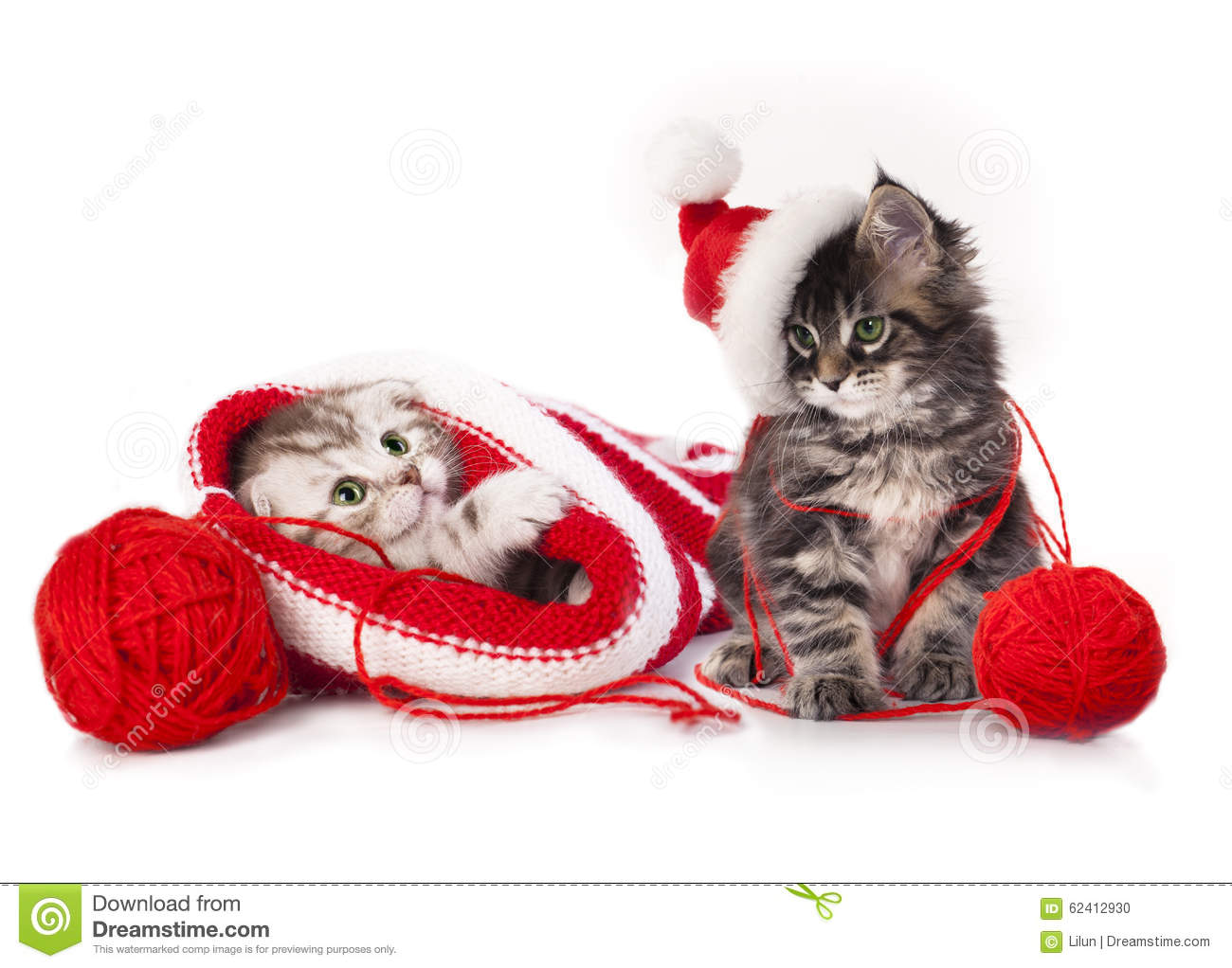 kittens With Christmas decorations