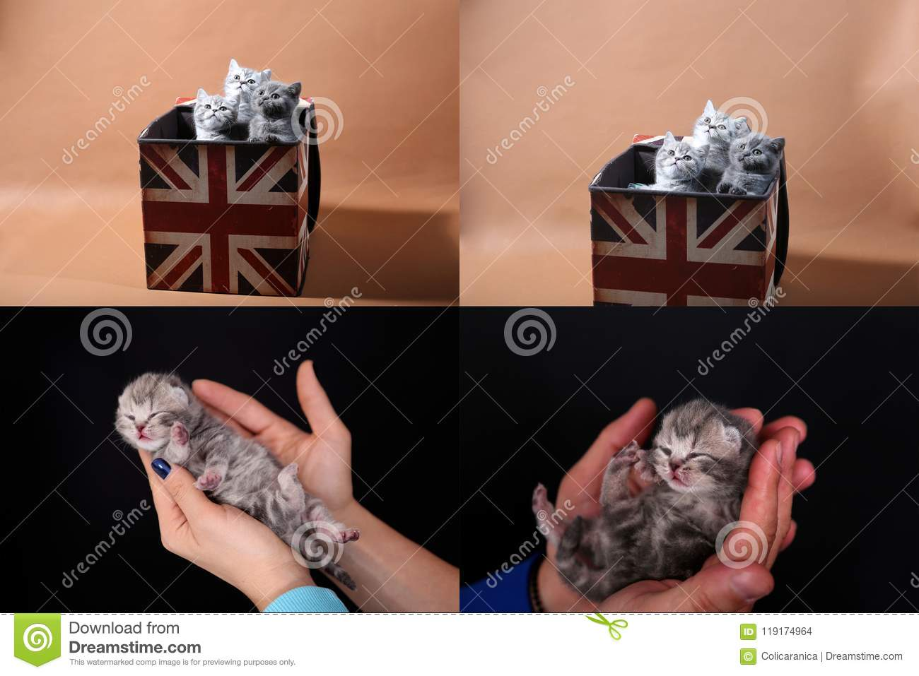 Kittens in human hand, multicam