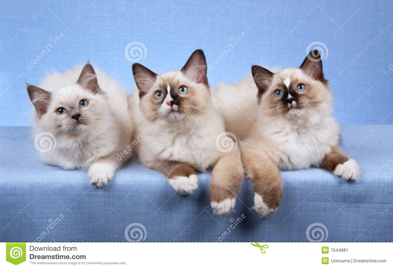 Kittens Lying In A Row Stock Image - Image: 7544981