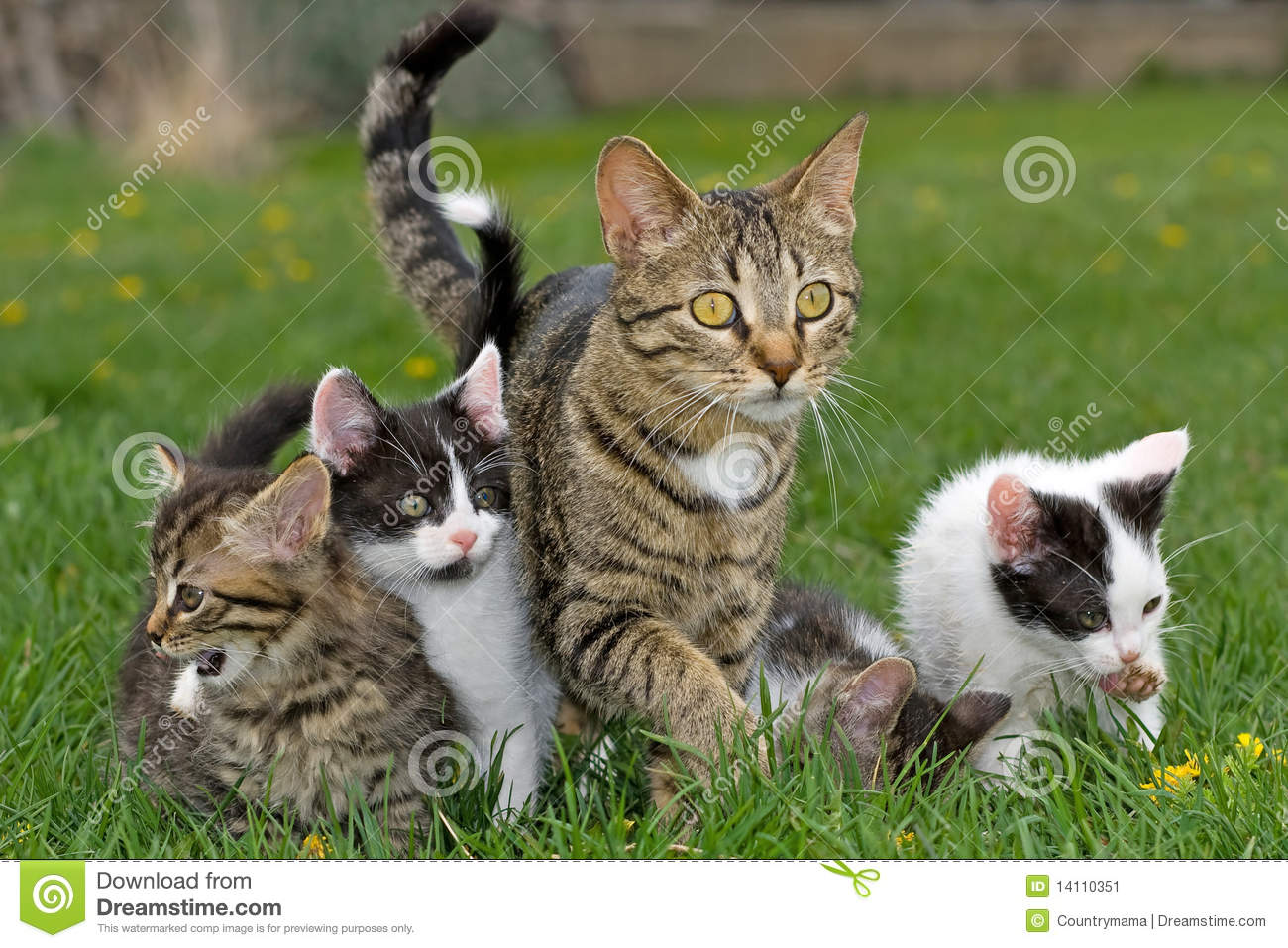 Kittens and mother.