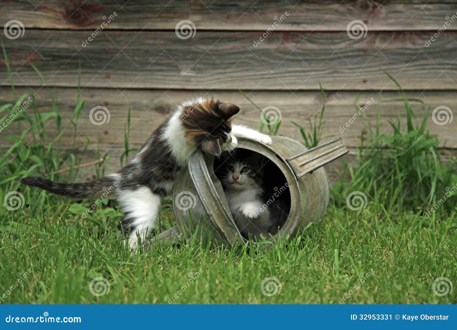 Kittens playing peek a boo