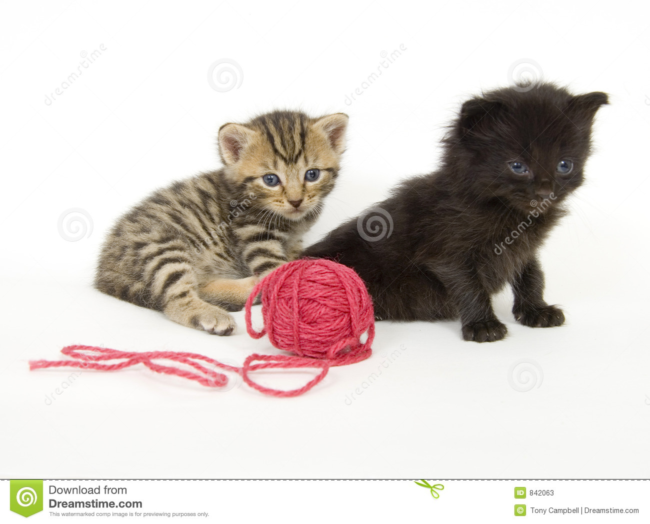 Kittens with red ball of yarn on white background