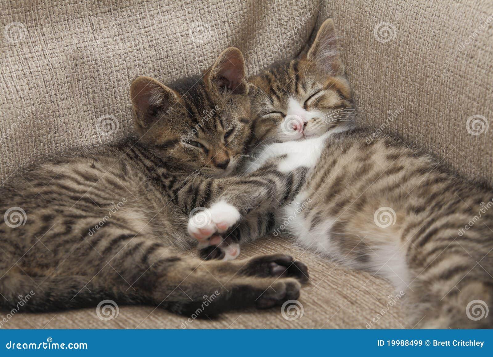Sleeping tabby kittens stock image. Image of cute, forever - 27487069