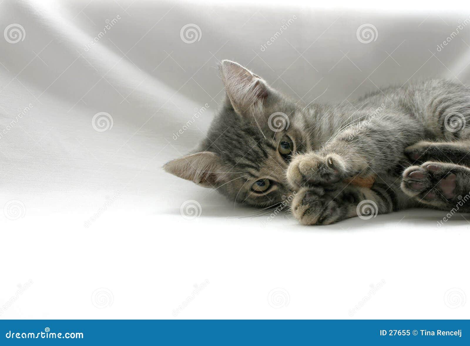 Kitty espiègle