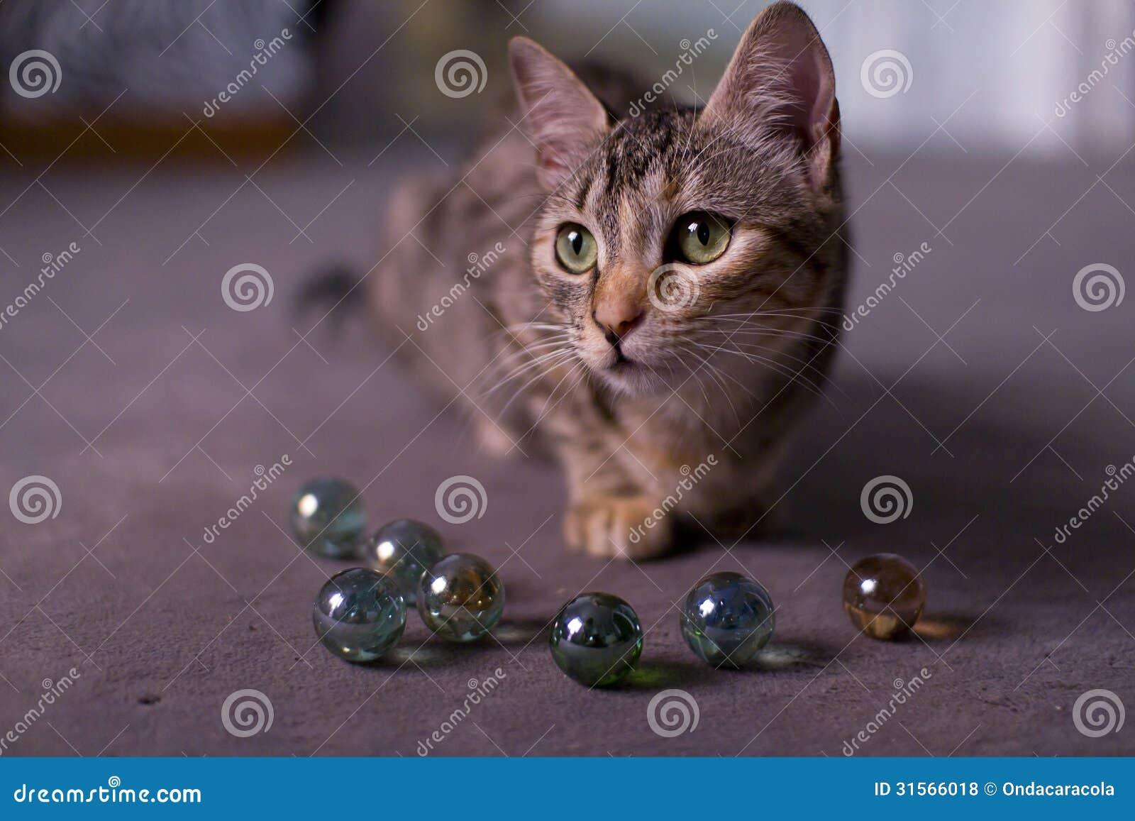 Transparent Crystal Cat Stock Photo Cartoondealer Com