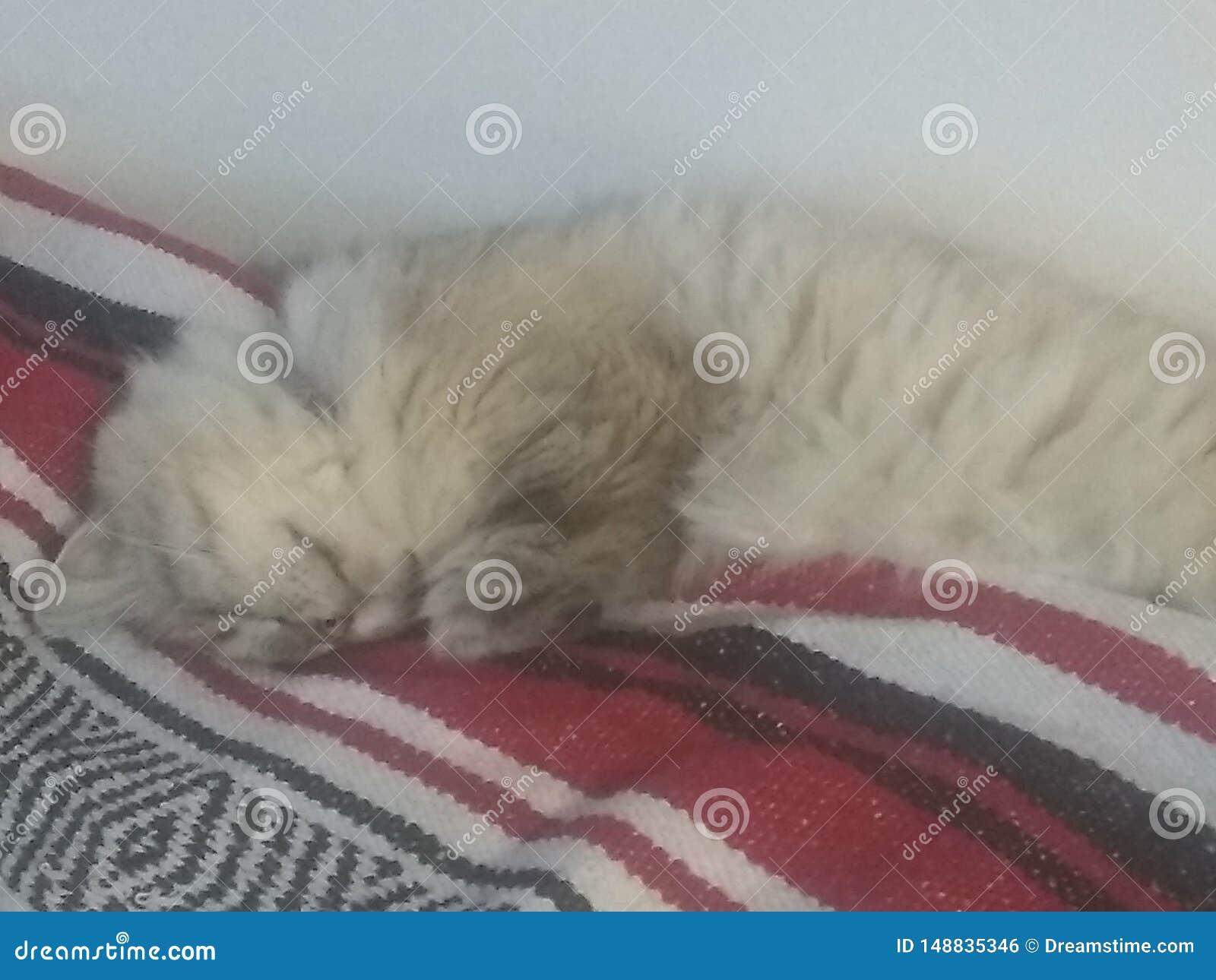 Kitty somnolent