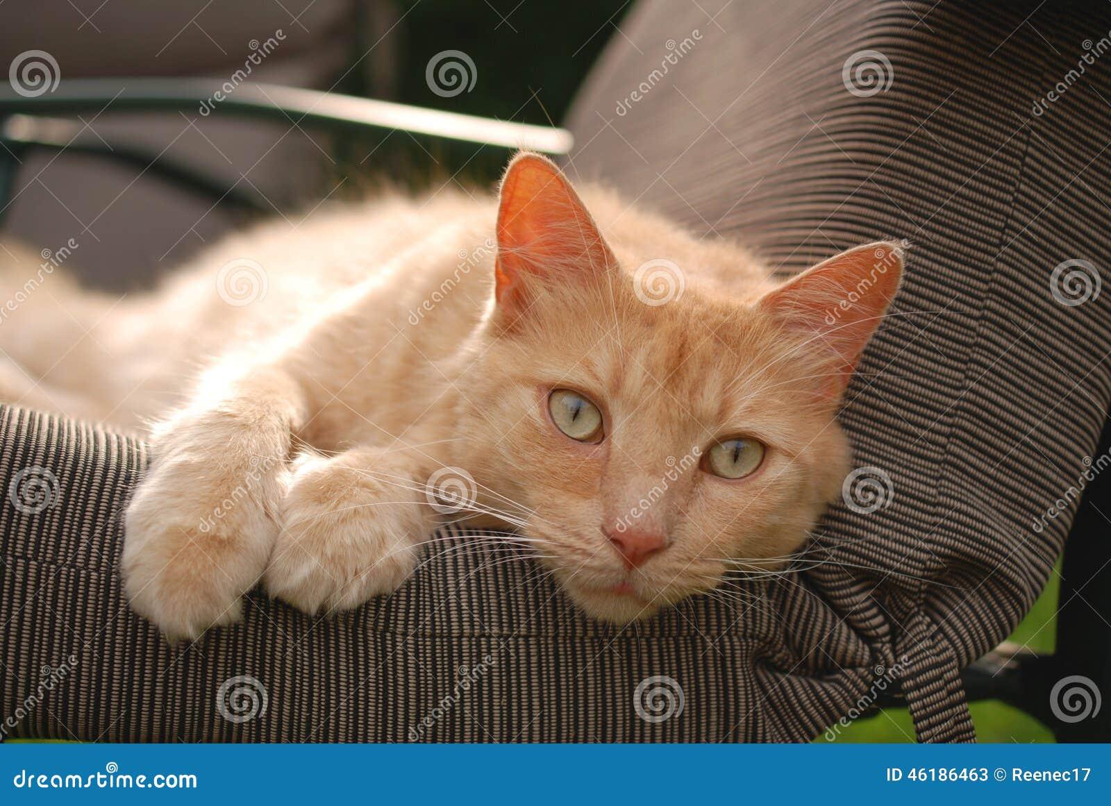 Kitty Stare mignonne