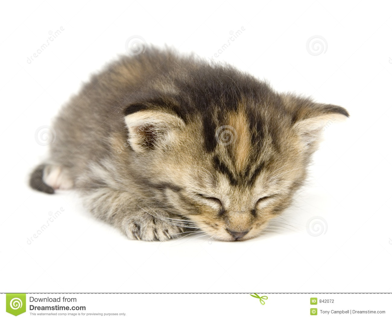 Kitty taking a cat nap on white background