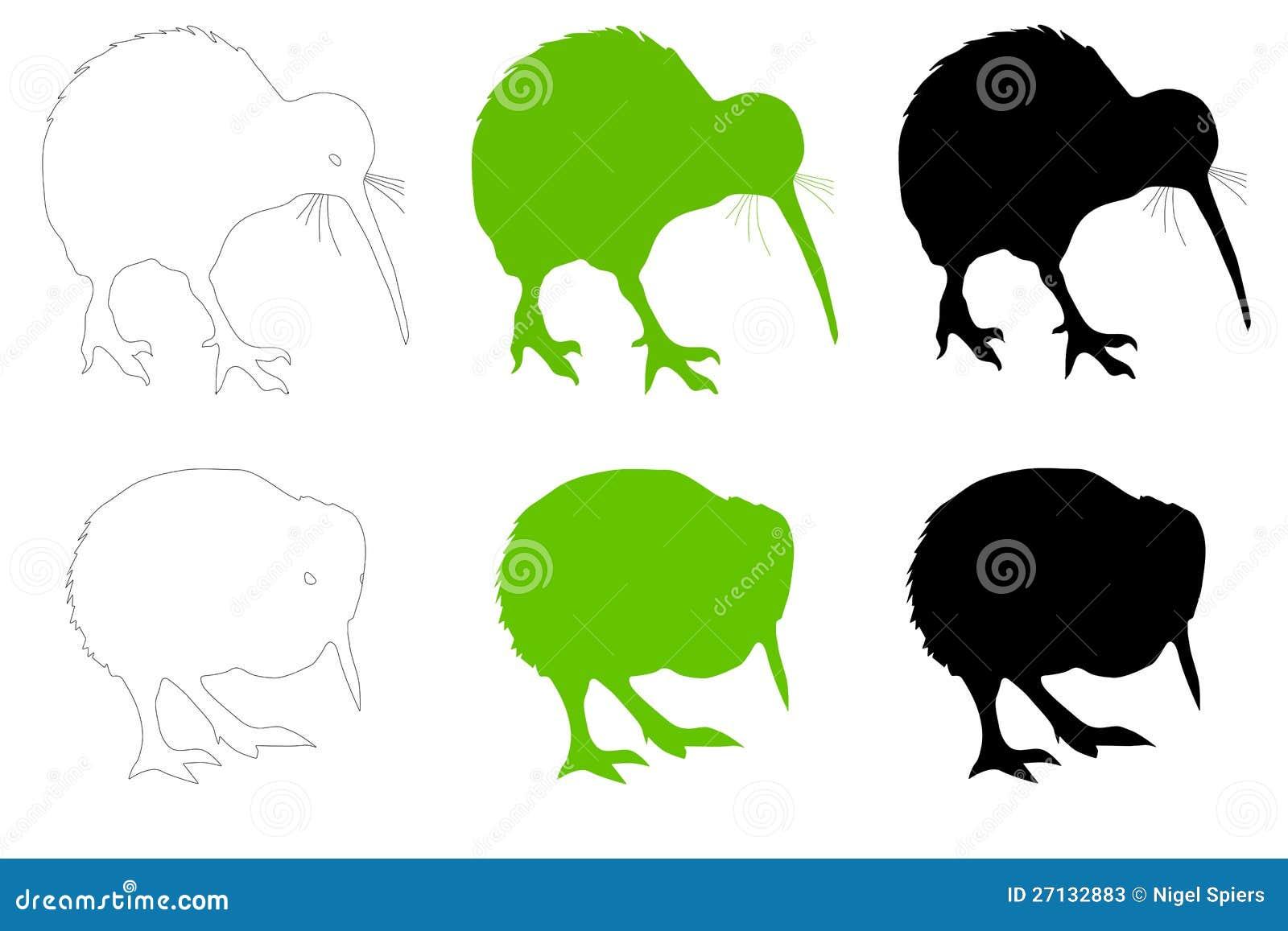 Kiwi Bird Adult Amp Baby Vector Illustration Stock Photos