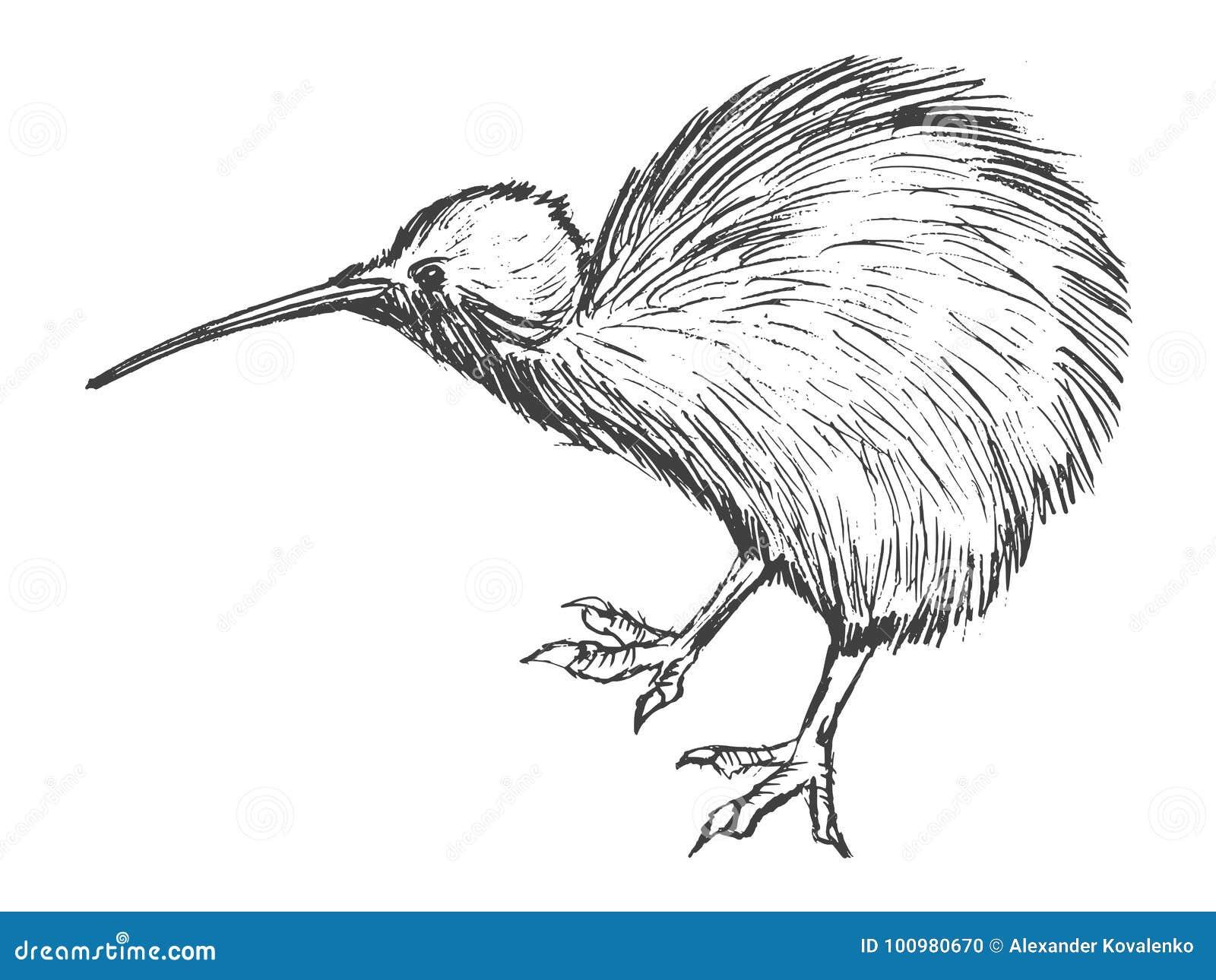 Kiwi Bird Symbol Of New Zealand Stock Illustration Illustration