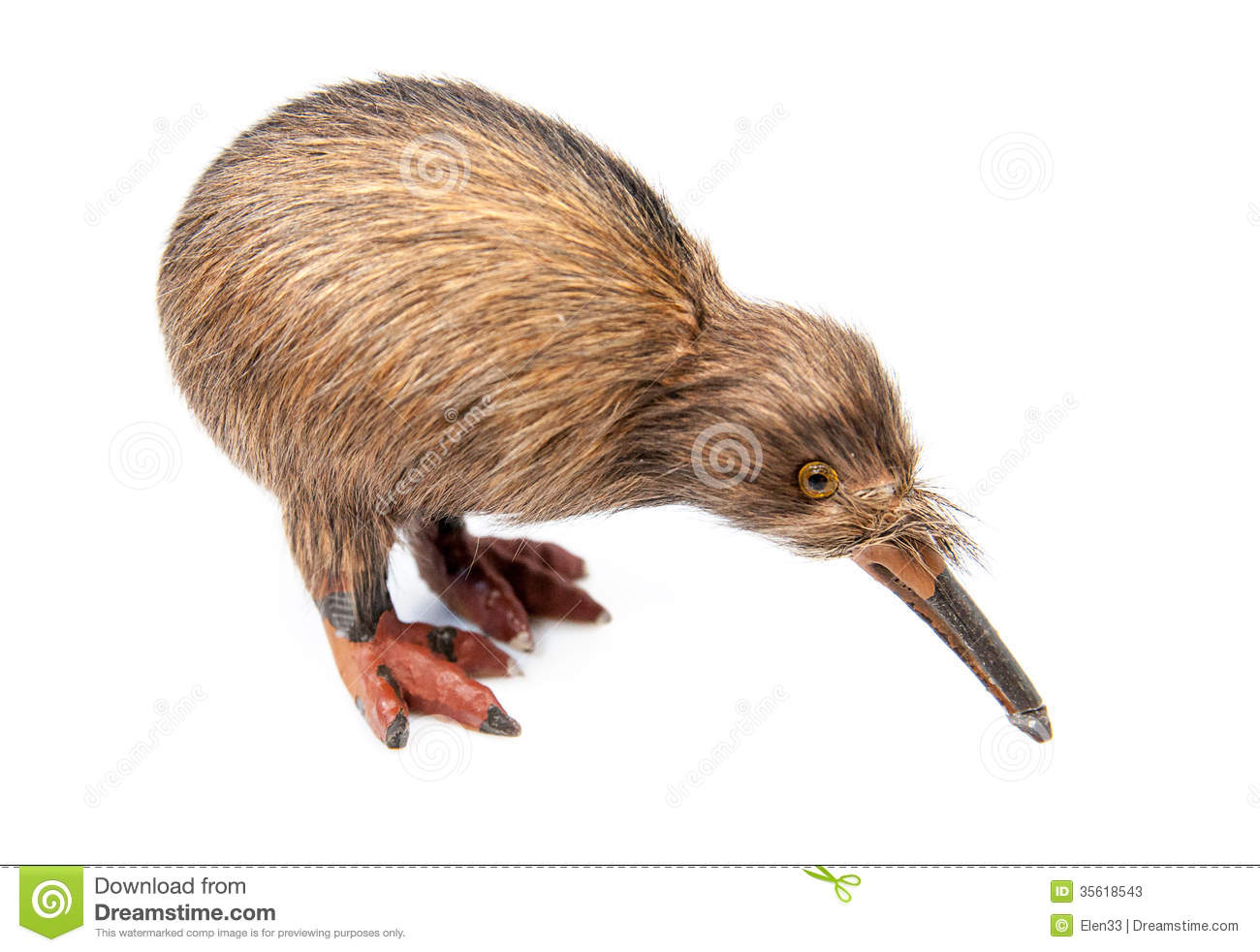 Kiwi bird toy isolated on the white background.