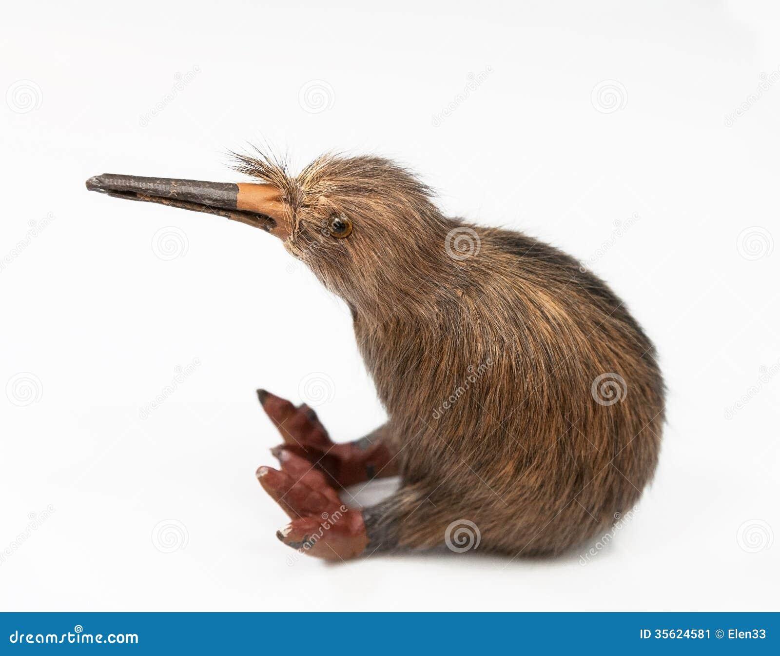 Kiwi Bird Toy Stock Image Image 35624581