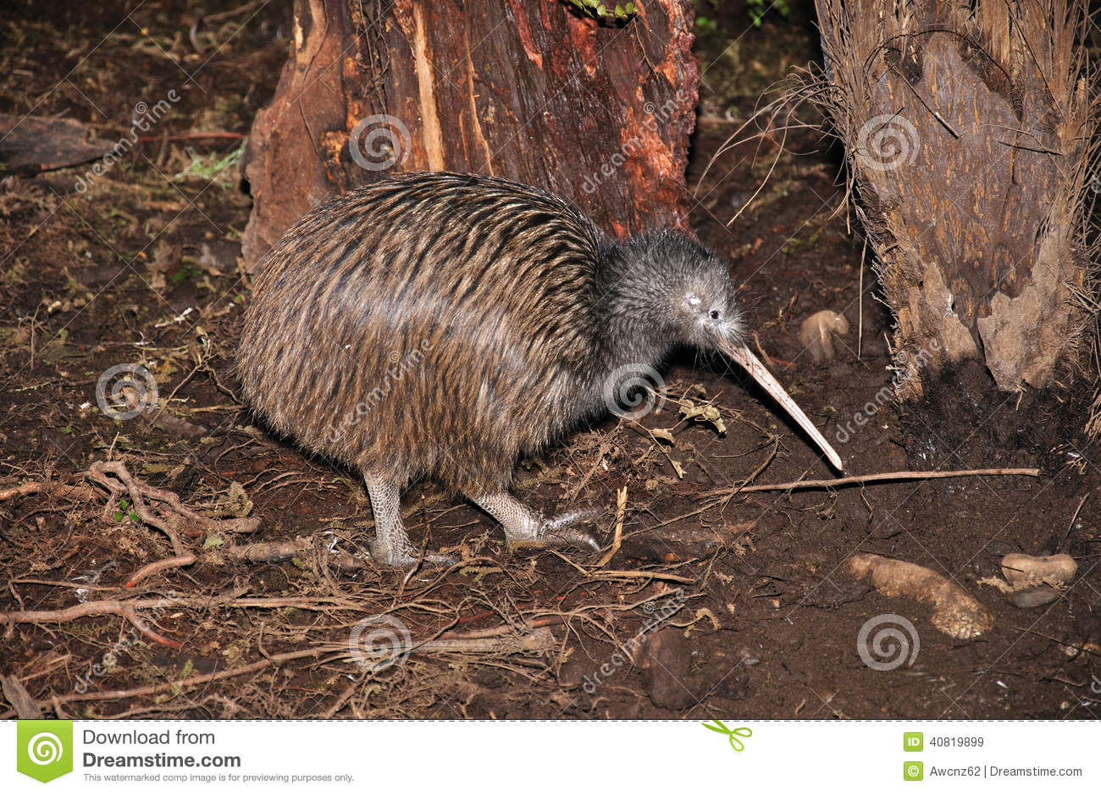 Kiwi in cespuglio