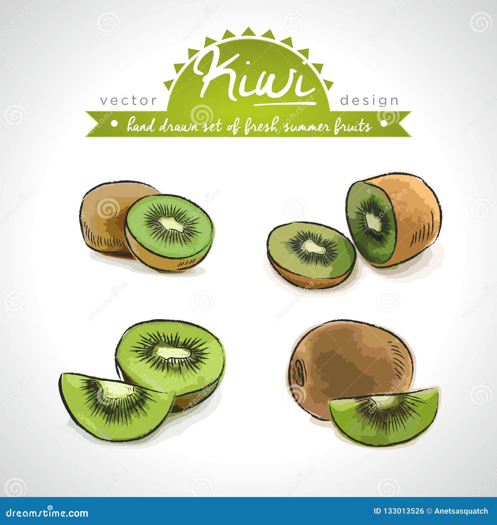 Kiwi Collection tirée par la main de vecteur d illustration de fruits frais de croquis D isolement