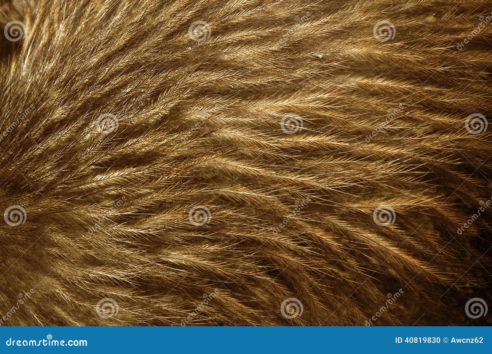 Kiwi feathers