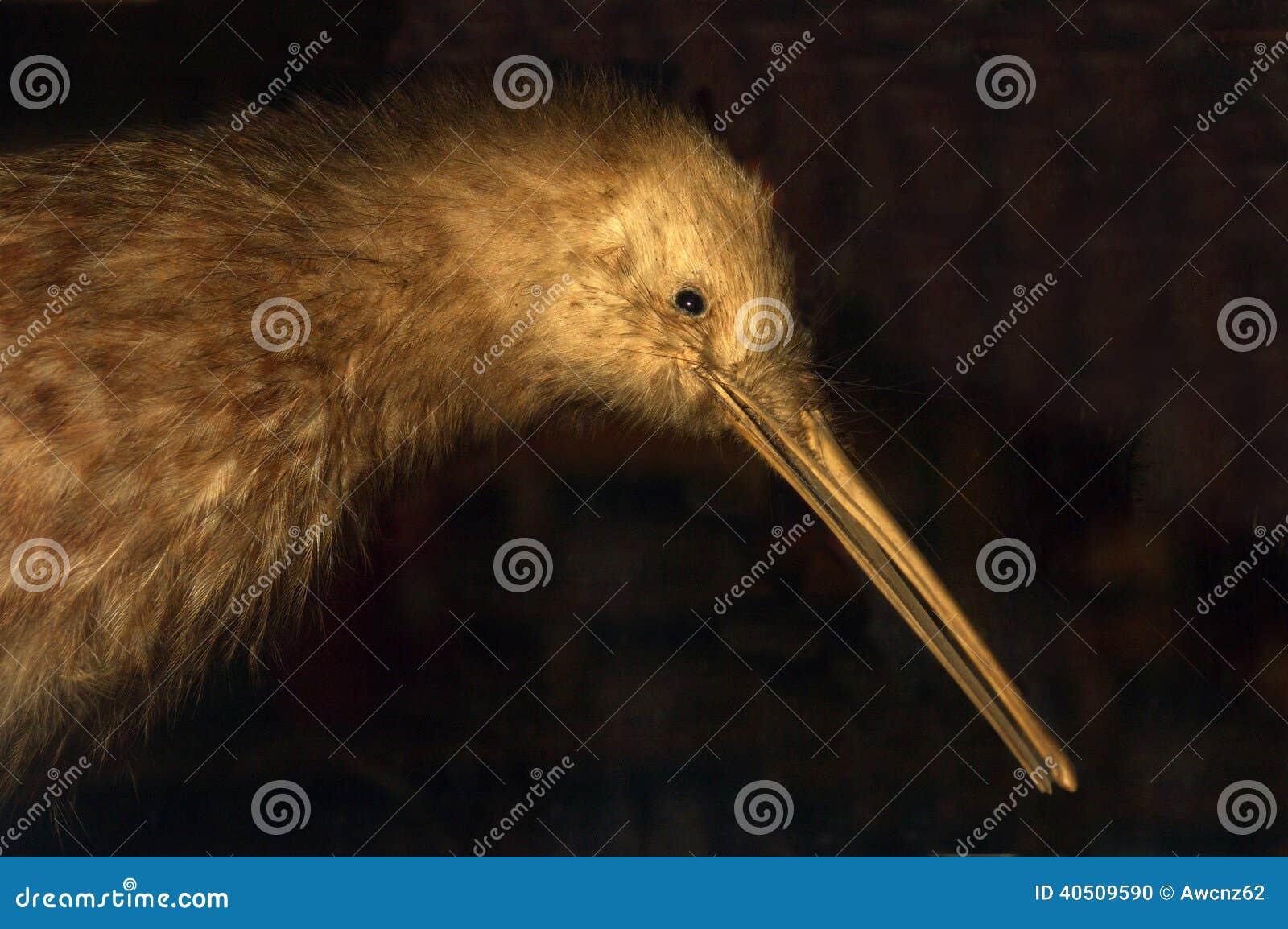 Kiwi repéré grand