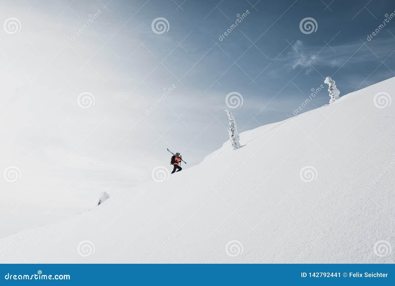 Klättra i berg att gå upp längs ett snöig berg med skidar i ryggsäcken Skidåkare på klättraspåret för freeride-nedstigning