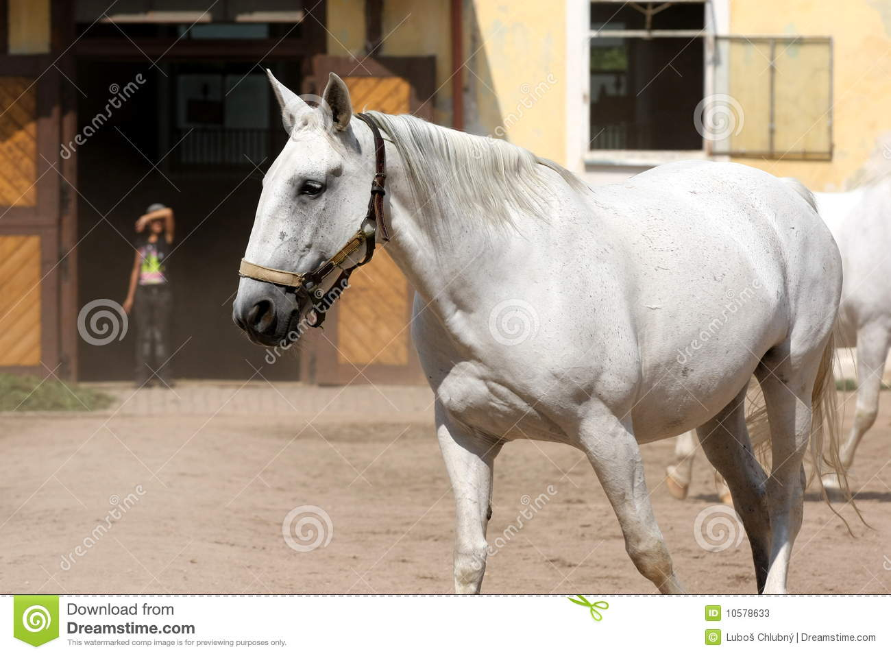 oldest Czech horse breed. The main breeding centre is in National stud ...
