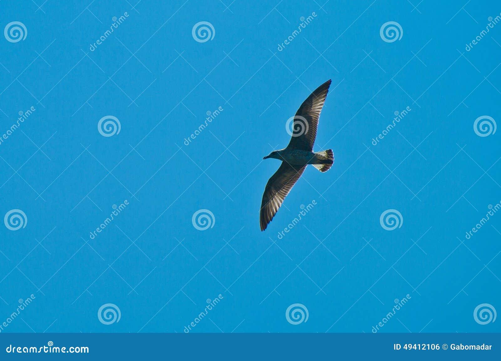 Download Klarer blauer Himmel stockfoto. Bild von fliege, weiß - 49412106