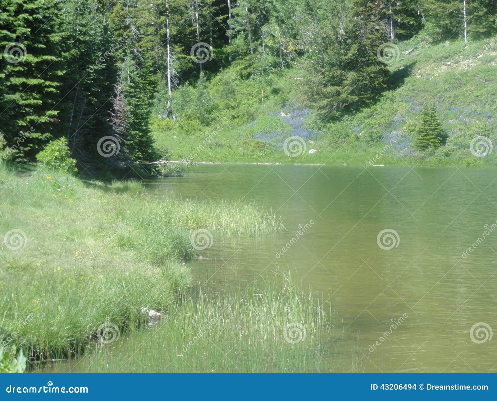 Download Klart crystal vatten arkivfoto. Bild av härlig, landskap - 43206494