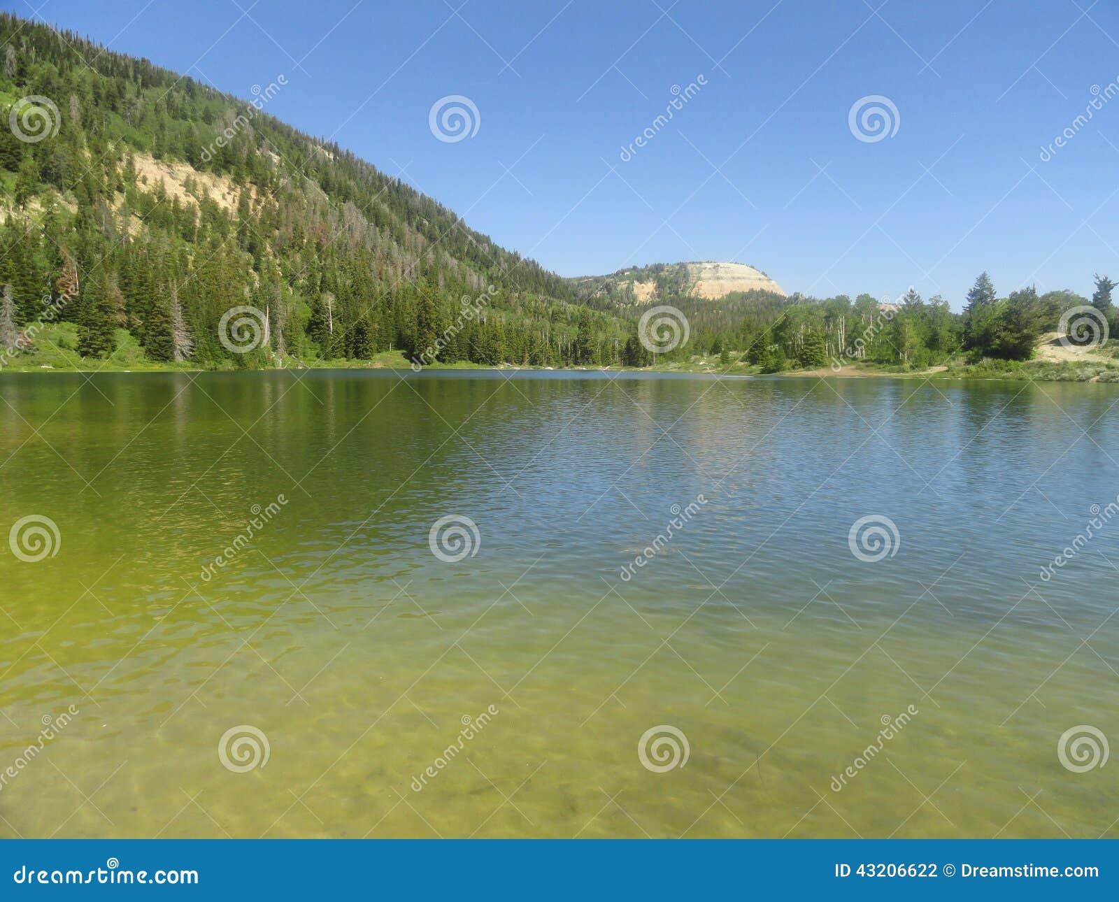 Download Klart crystal vatten arkivfoto. Bild av natur, creek - 43206622