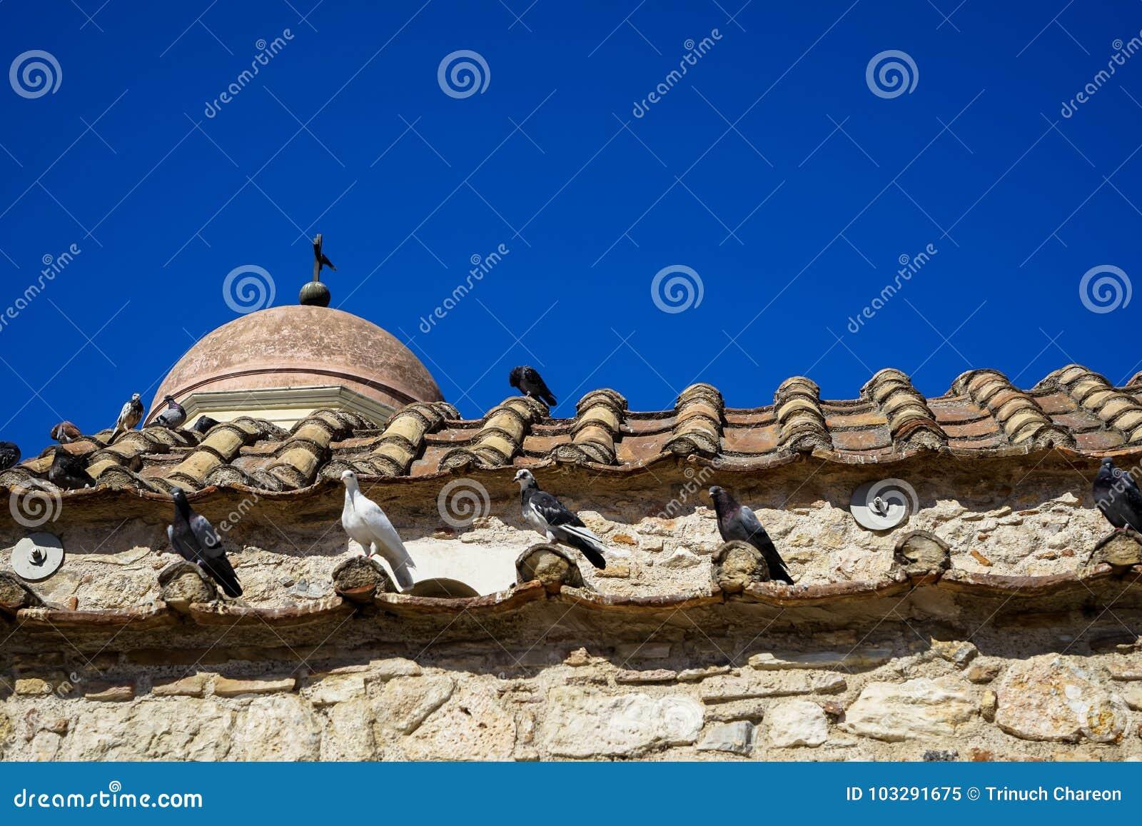 Klasyczna scena gołębie w białym, czarnym i popielatym kolorze na terakotowej dachowej płytce stary klasyczny mały kościół w ziem