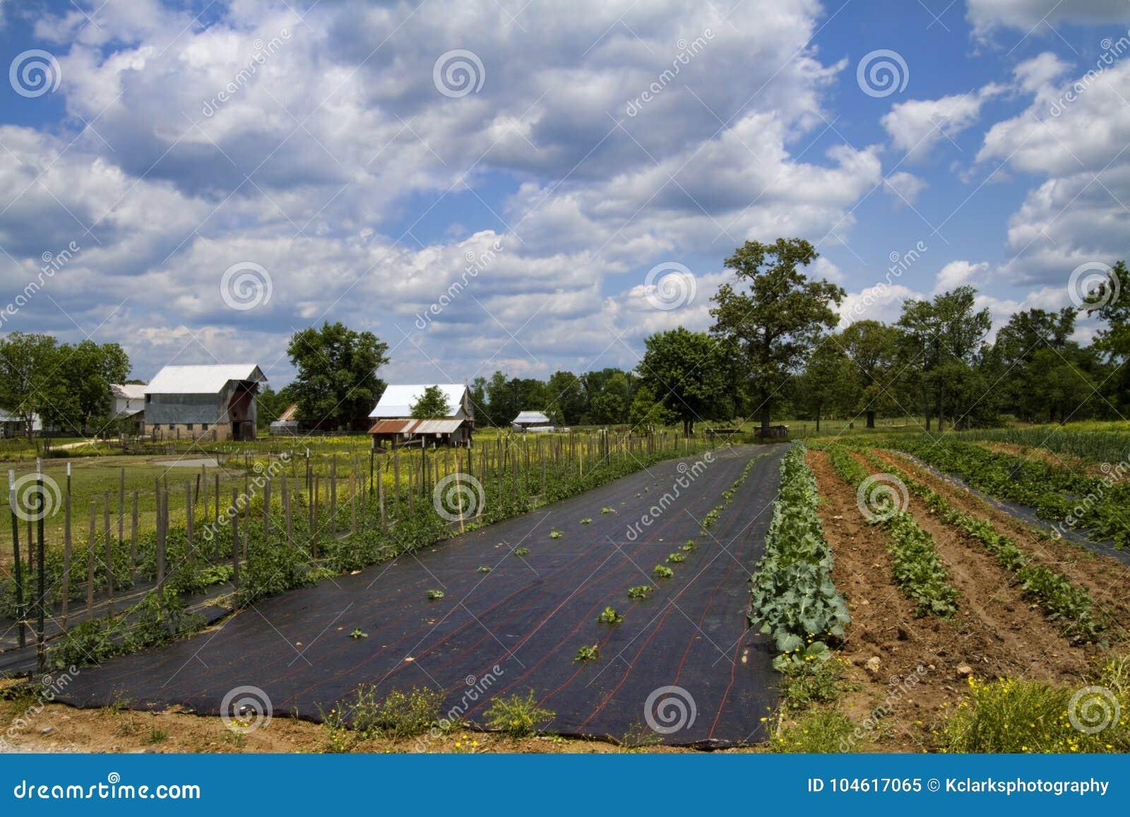 Klasyczny Amish gospodarstwo rolne, ogród i