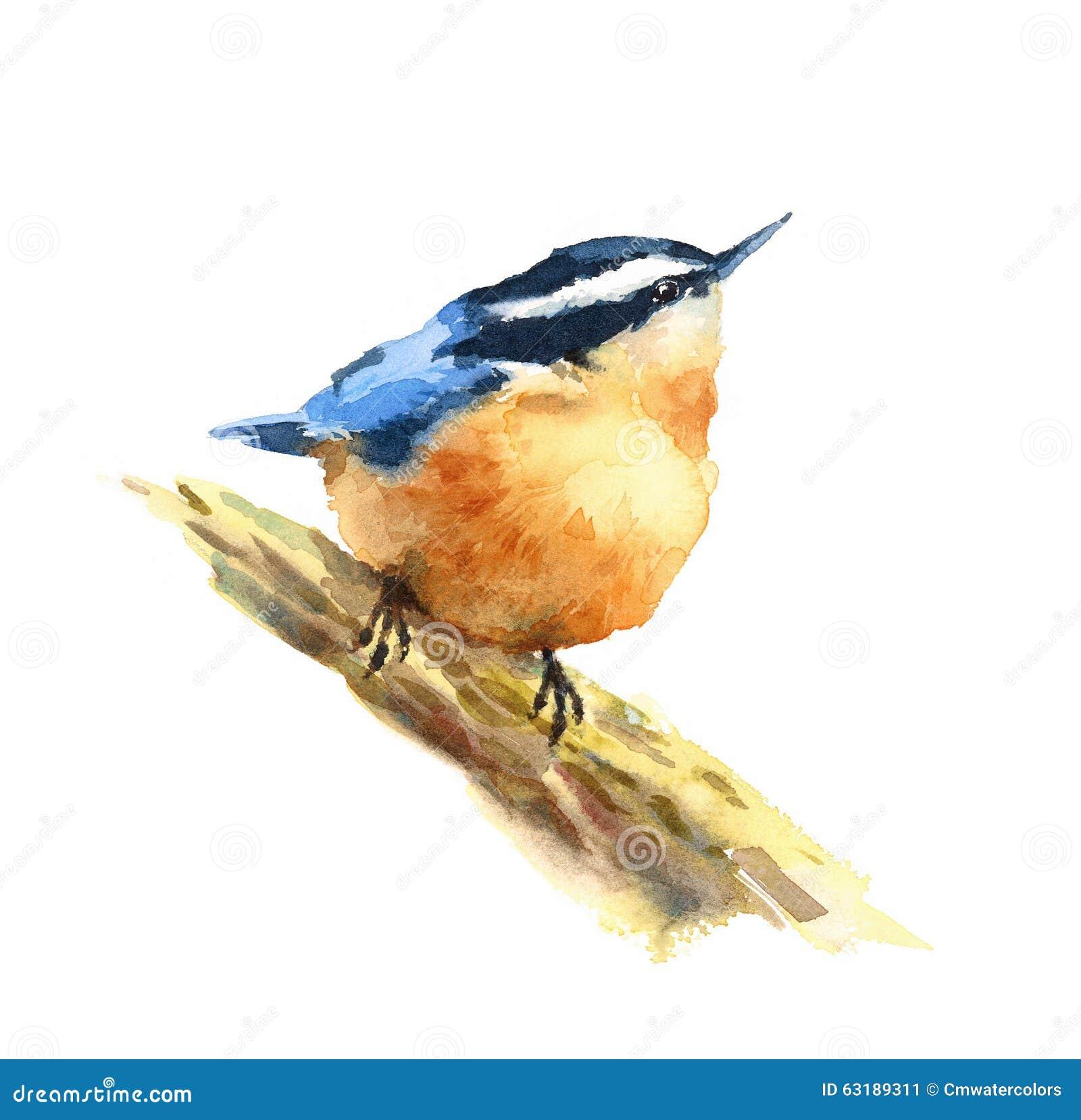 kleiber vogel aquarell illustrations hand gezeichnet stock abbildung illustration von gemalt. Black Bedroom Furniture Sets. Home Design Ideas
