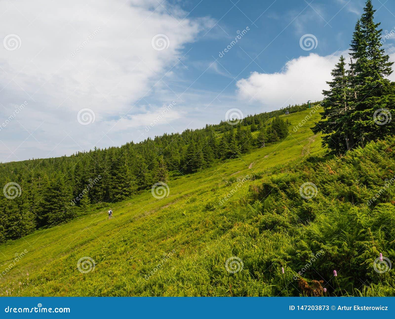 Klein blokhuis onder een boom in de bergen