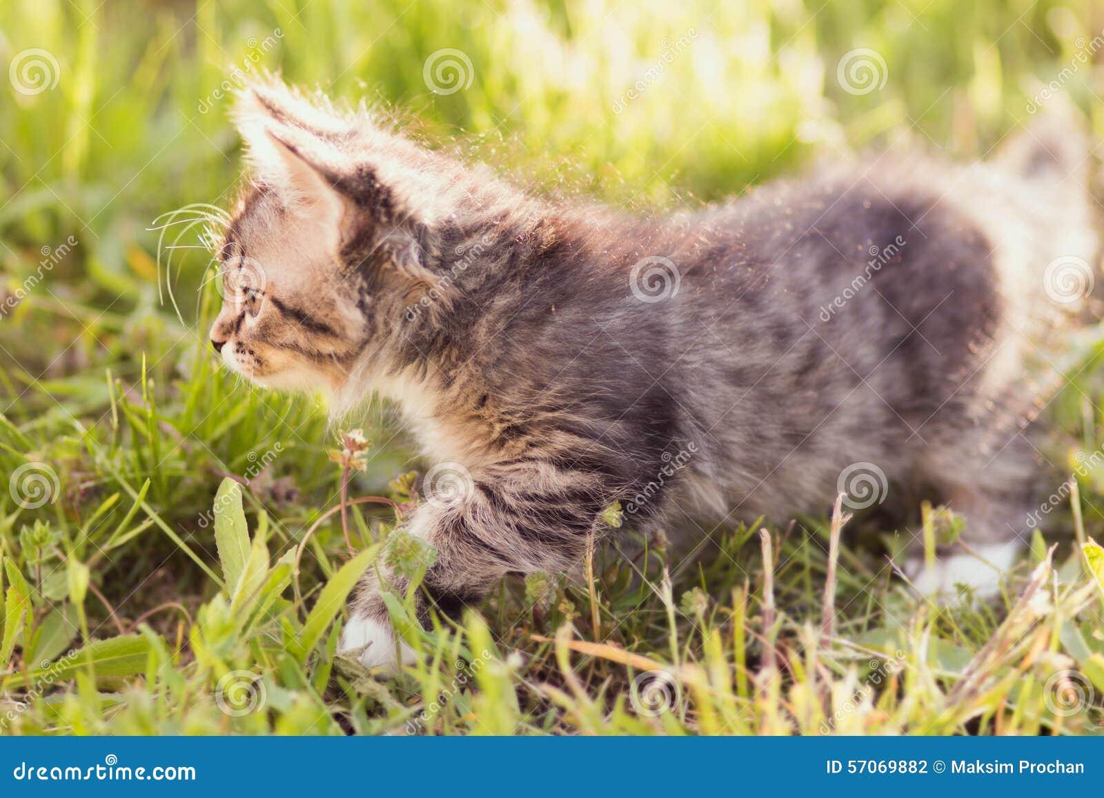 Klein katje die in gras lopen