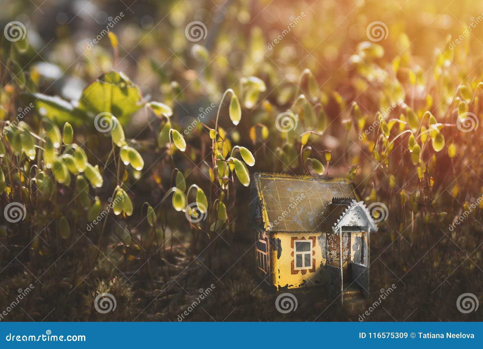 Klein oud magisch fee of elfhuis in mos in de boszonneschijn in de avond Fabelachtige magische open plek in het sprookjebos